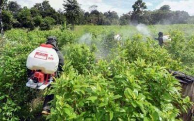 Informe especial: De norte a sur y de oriente a occidente: así crecieron los cultivos de coca en Antioquia