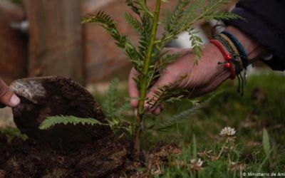 Reforestación contra la deforestación de bosques
