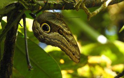 Bosques de la región biogeográfica del Chocó, en peligro CRÍTICO de desaparecer
