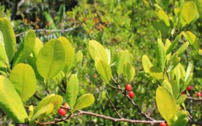 Pierre Lapaque de ONUDC ¿Contra los acuerdos de paz en sustitución de cultivos de coca?