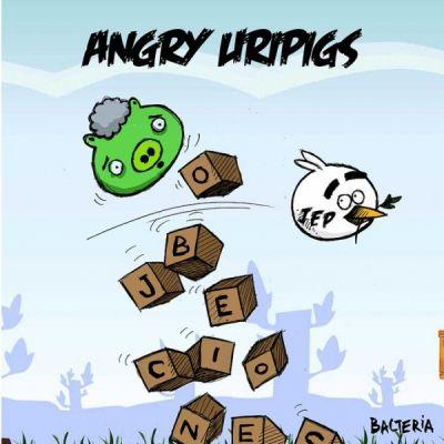 ANGRY URIPIGS